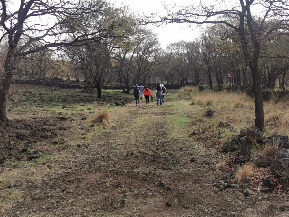 Image shows a group of people walking along a dirt road surrounded by trees, grass and shrubs