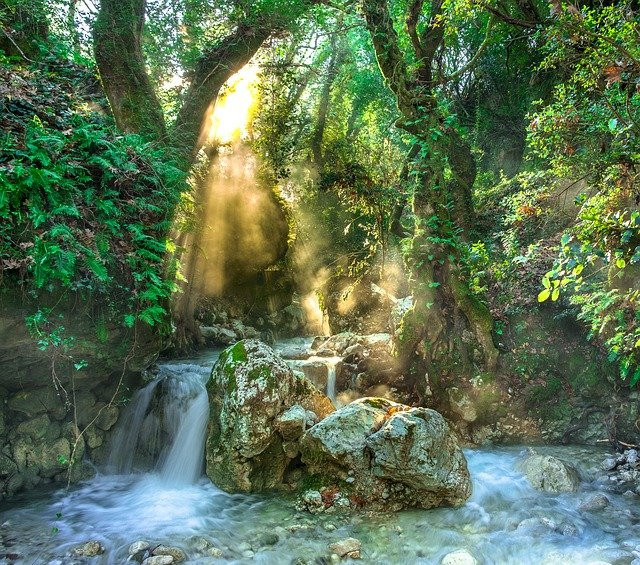 A river in a jungle with sunlight shining through the canopy