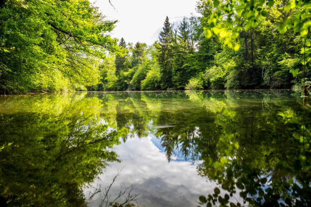 Still pond in the forest