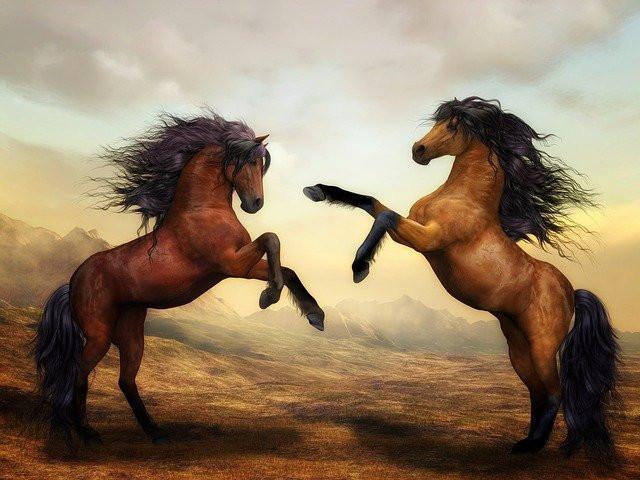 two wild stallions