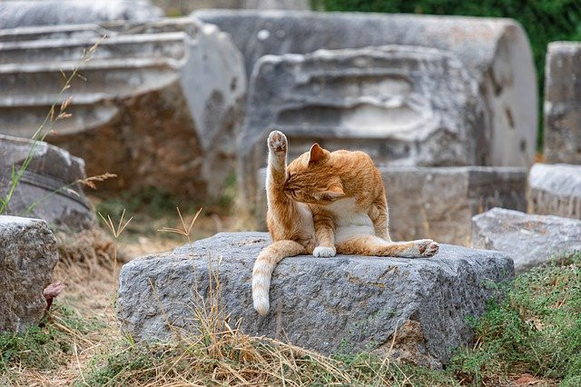 Image shows a tabby cat sitting on a stone licking its outstretched leg