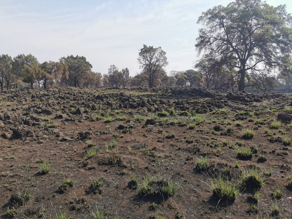 Image shows a rocky field with patches of grass in the foreground and trees in the background