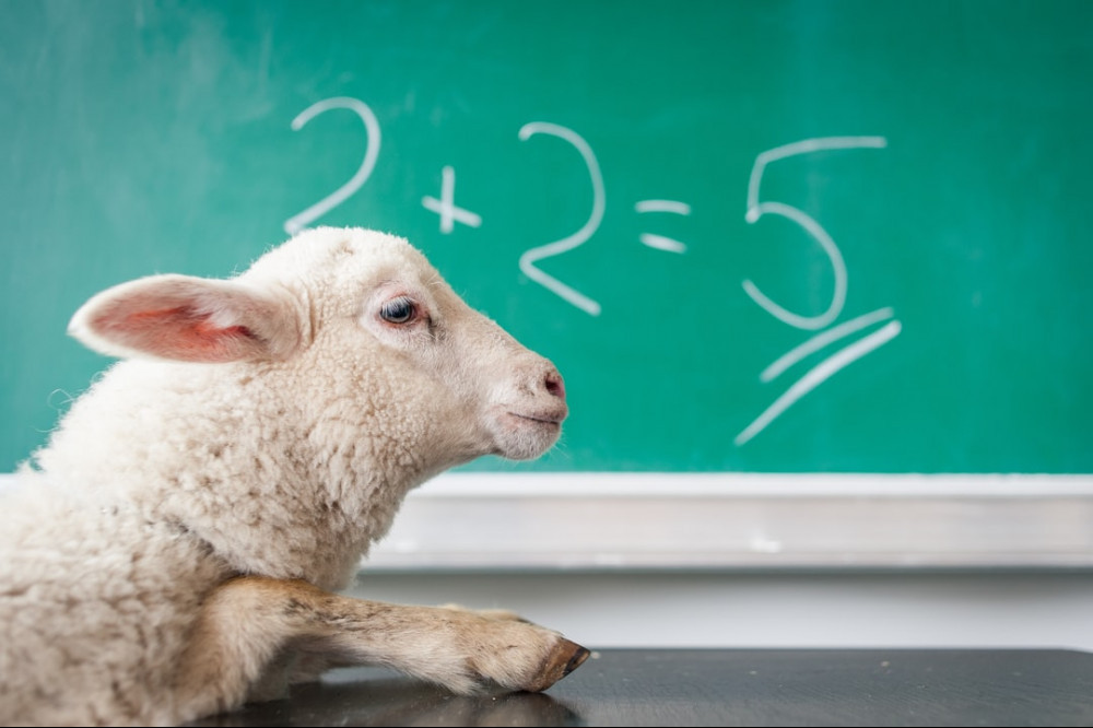 """Profile of a lamb with a blackboard in the background displaying """"2+2=5"""""""