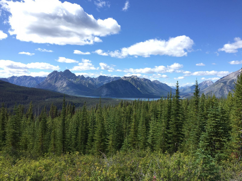 Image shows a blue sky with a few clouds over a mountain range with a forest in the foreground