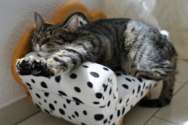 Cat stretching on a miniature white couch with black spots