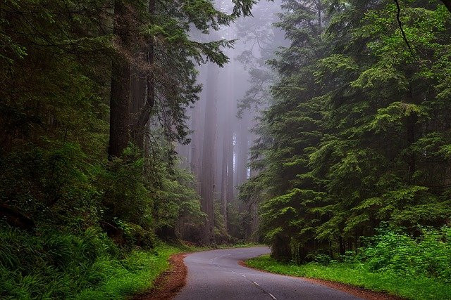 Image shows a road winding through a verdant forest