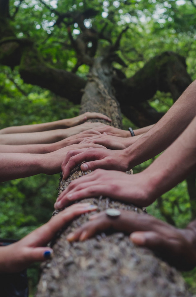 Image shows six different pairs of hands on a tree trunk seen from below