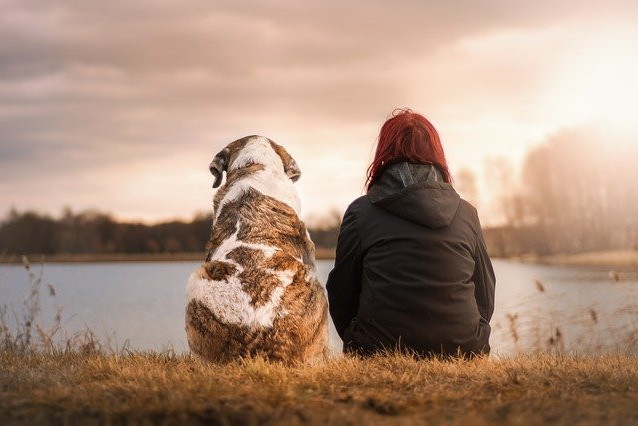 dog and human side by side