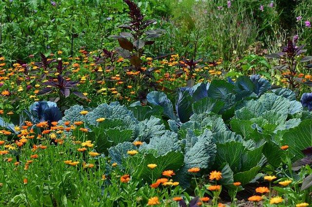 Vegetable Flower Garden