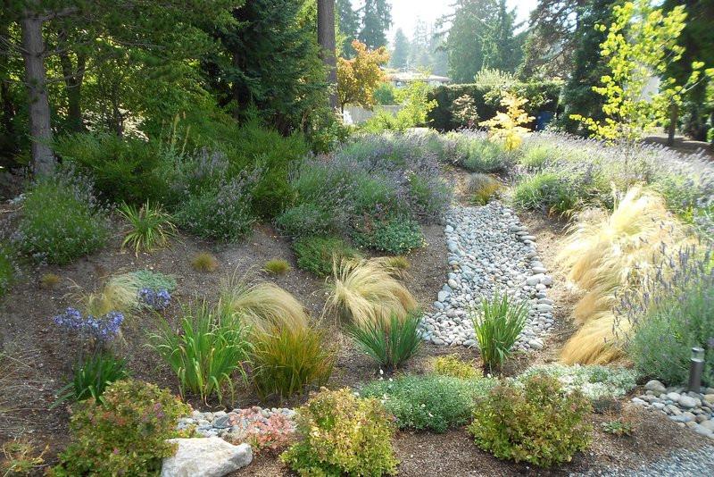 Rain Garden - Rain Garden design plans