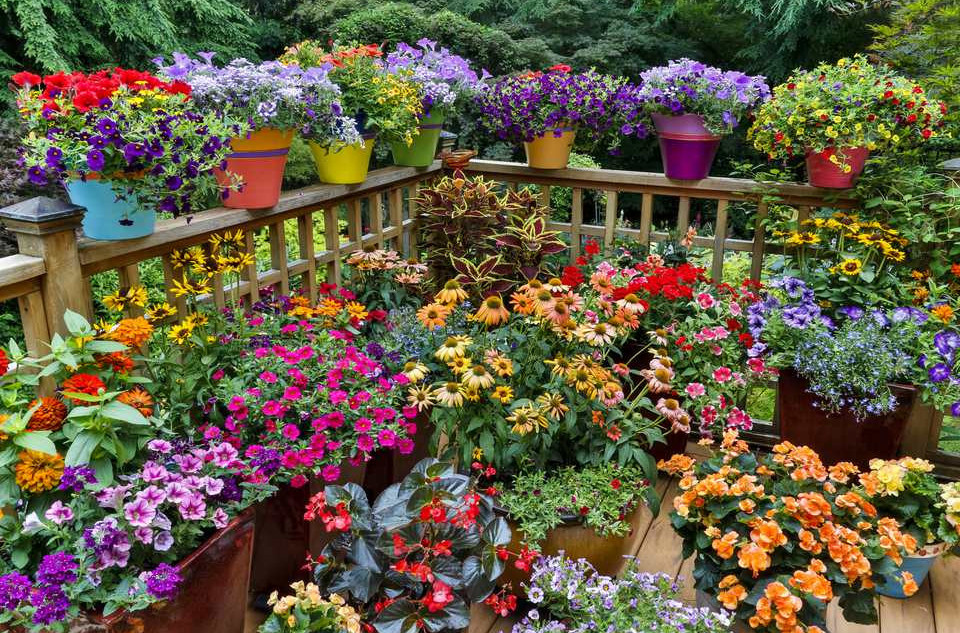 Flower Container Garden