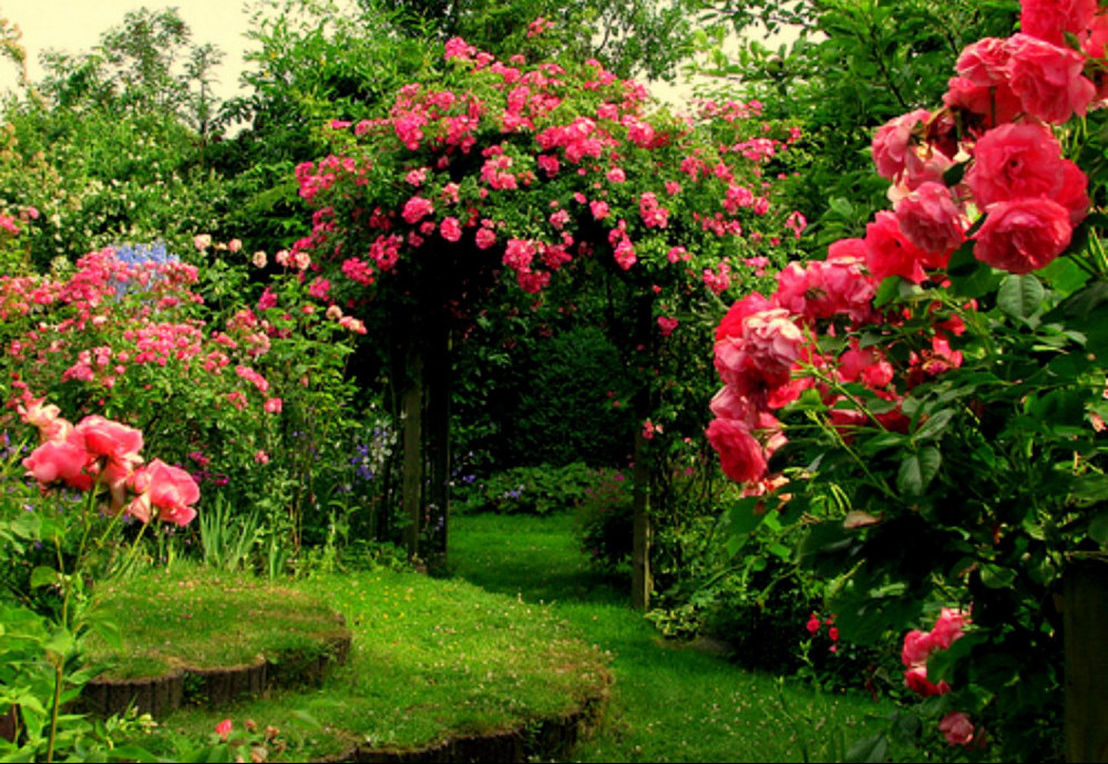 Beautiful Rose garden with arch and grass steps