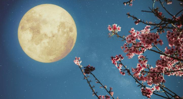 Flowers in the Moonlight