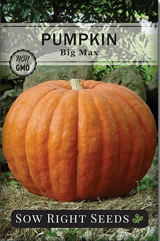 Big Max Pumpkins