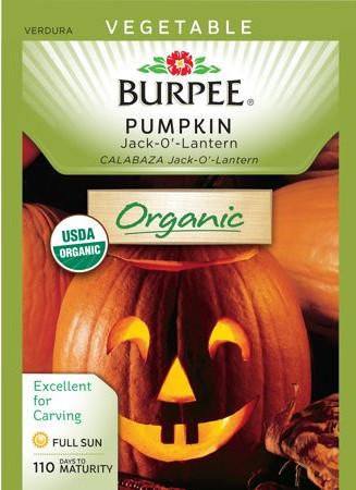 Jack-O-Lantern Pumpkin seeds by Burpee