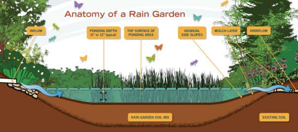 Anatomy of a Rain Garden