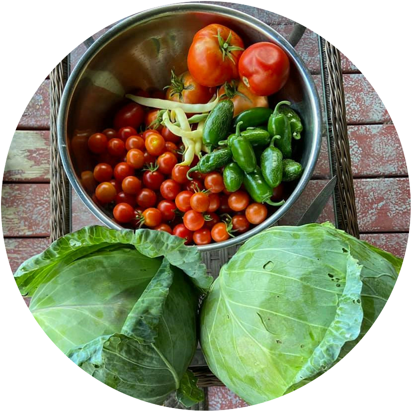 Vegetables from my Garden