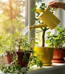 plant moisture meter chart