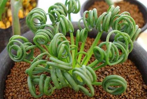 best indoor small plants