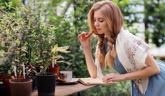maidenhair fern plant care