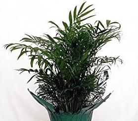 best indoor tree plants