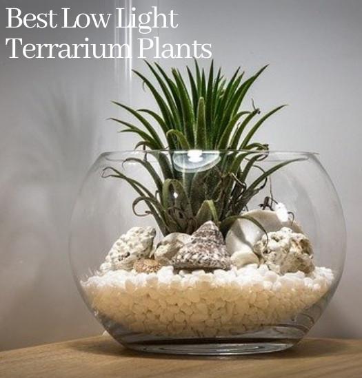 indoor christmas cactus plant