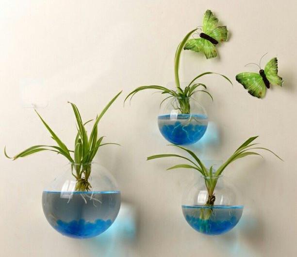 best low light terrarium plants