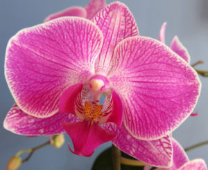 indoor orchid plant care