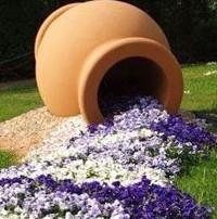 easy indoor flowering plants
