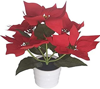 popular christmas flower plants
