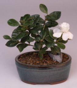 best indoor winter plants