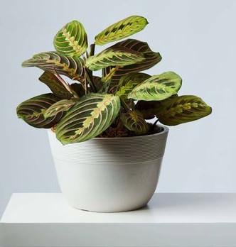 buy exotic plants online