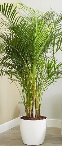 best indoor large plants