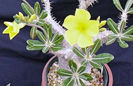 about rare exotic plants