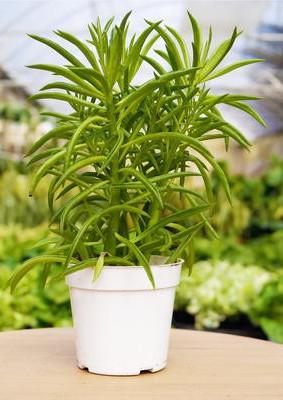 small indoor cactus plants