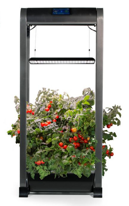 best container garden plants