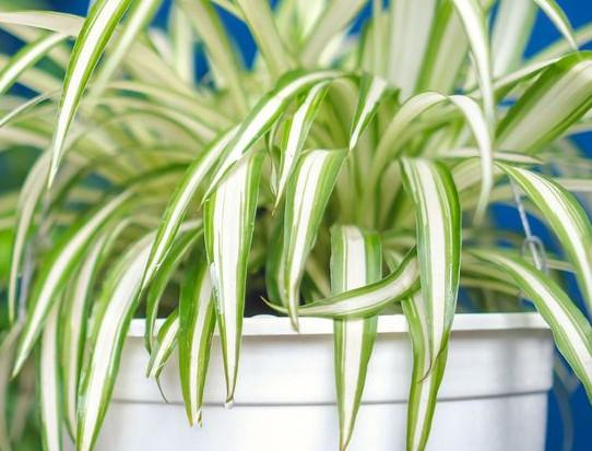 indoor wall hanging plants