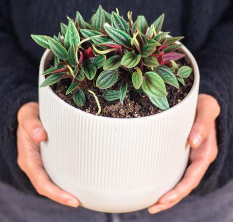 cheap exotic plants