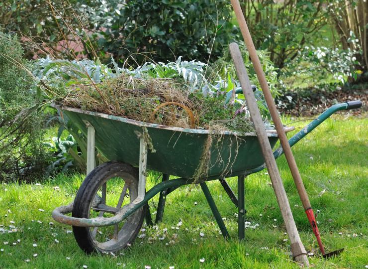Wheelbarrow Full of Weeds