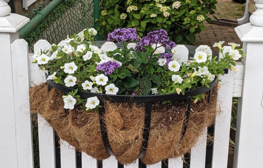 Hanging Basket on a Gate