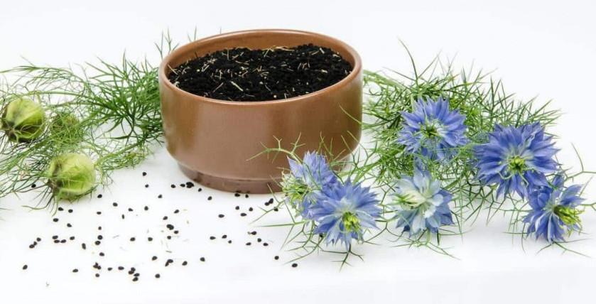What Is Black Cumin Seed / Black Seed?