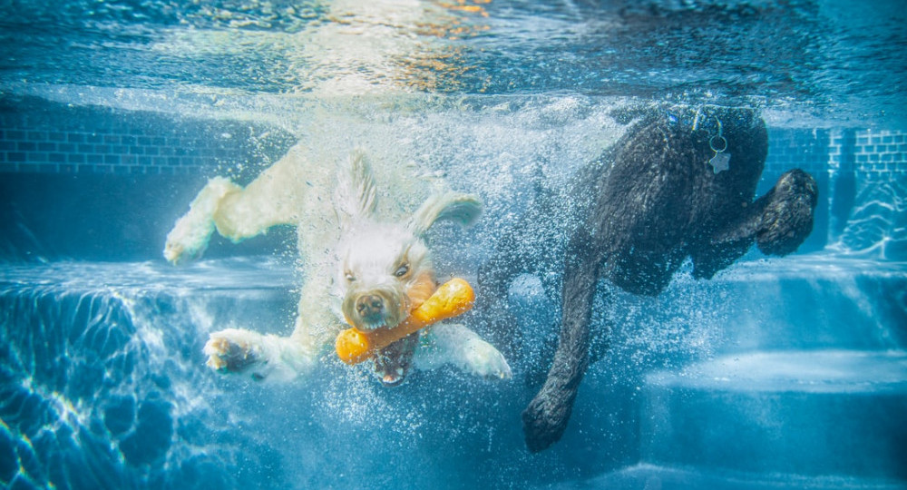 Dog under water with a toy bone