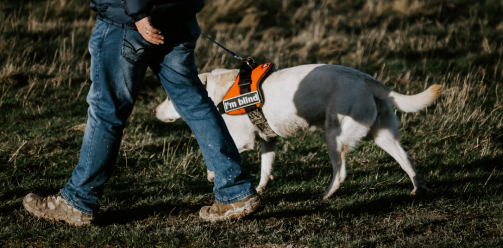 Walking with a blind dog