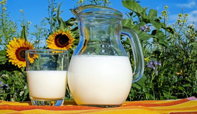 A jug and glass of milk on a yellow and orange towel in front of some sun flowers