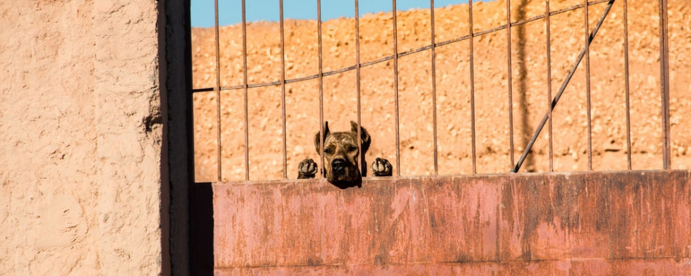 A dog looking through bars of a gate