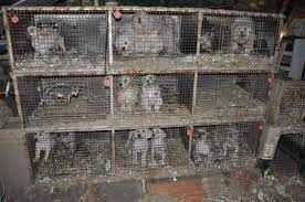 Puppies in a caged puppy mill