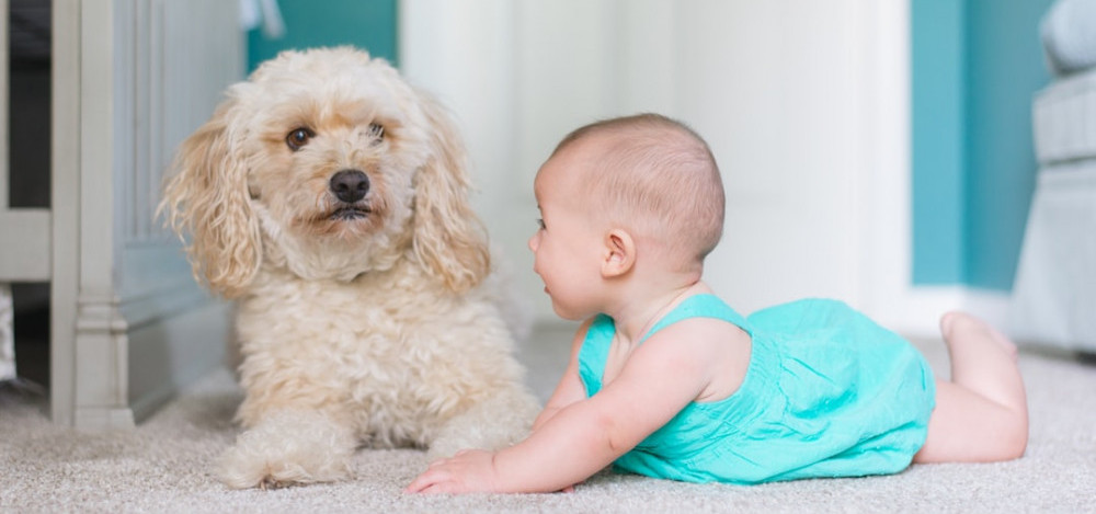 Cute white fluffy dog with a baby
