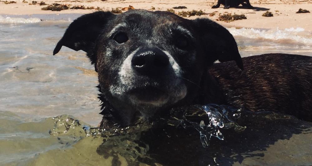 Old Salty Dog