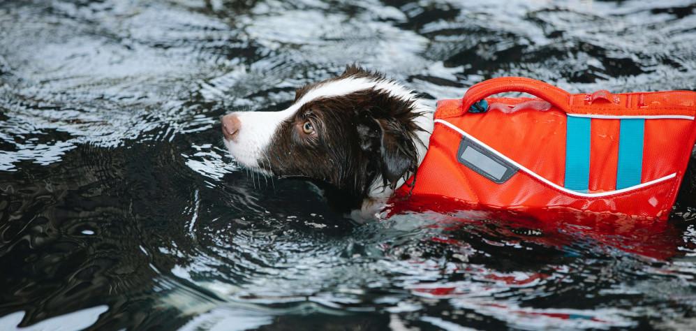 Dog with life jacket swimming