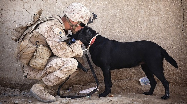 No Marketer Left Behind soldier and dog image